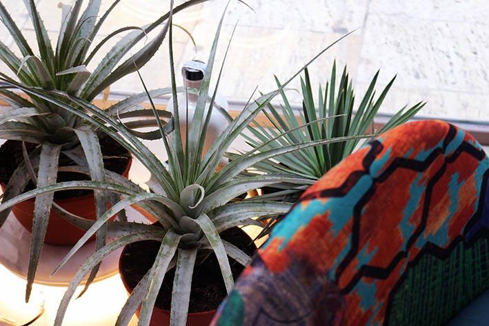 Murcia Diseña _ Urban Jungle